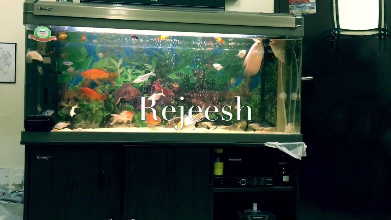 Freshwater Aquarium Fish In Dubai - My aquarium in dubai