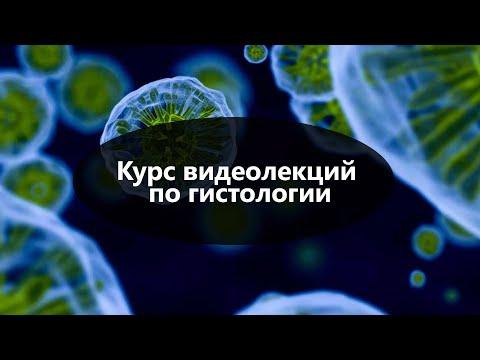 Гистология видео уроки