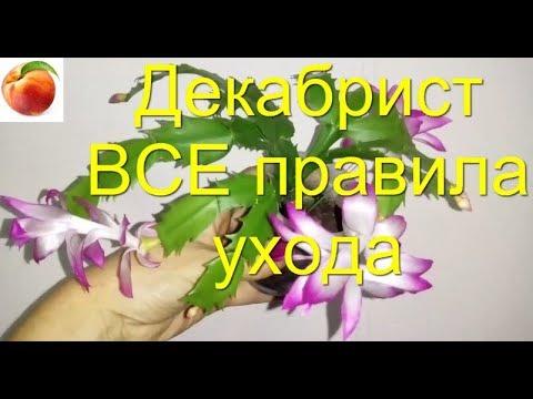 Декабрист ВСЕ Секреты Цветения Все правила Уход Schlumbergera Почему не цветет Шлюмбергера Октябрь