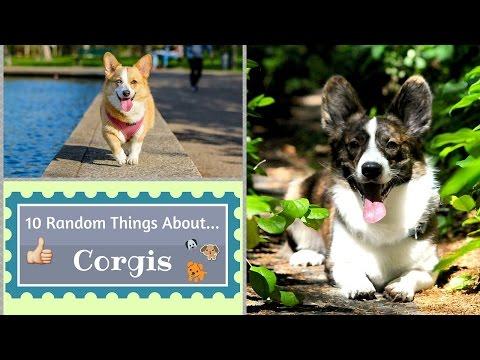10 Random Things About...Corgis