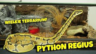 Python regius - duże terrarium dla Pytona królewskiego!