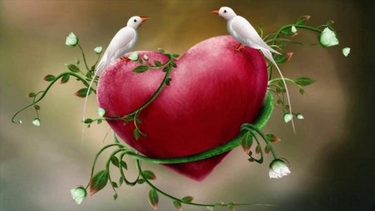 love birds wallpaper for