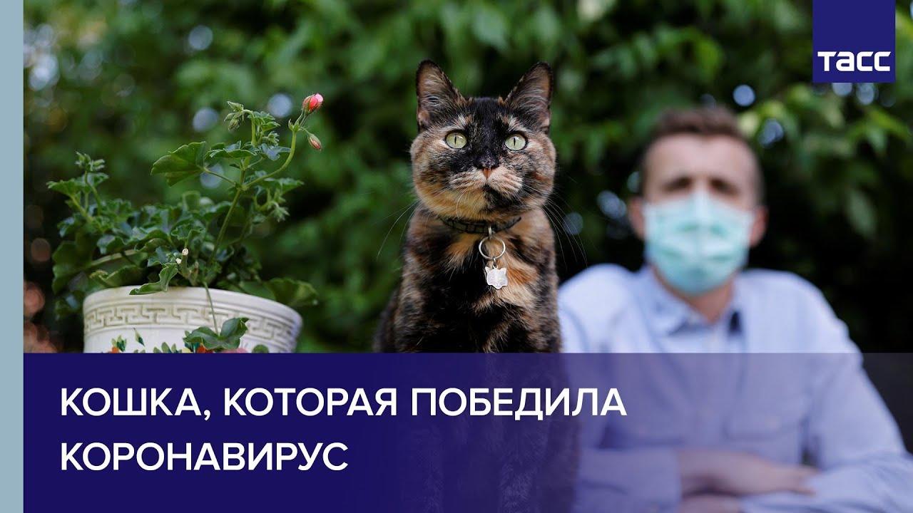 Кошка, которая победила коронавирус
