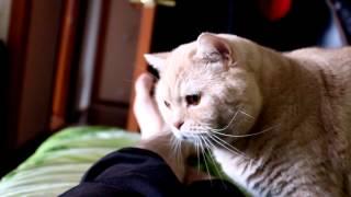 Как мы жили вдвоем с котом