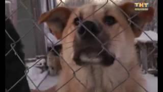 Собаки мешают лыжникам. 15.11.2016