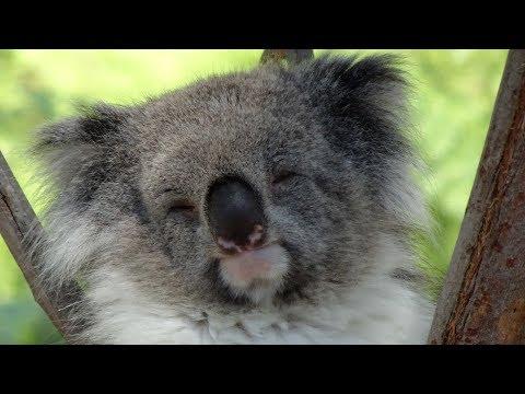 A Trip Down Under Part 4 - Return to Australia