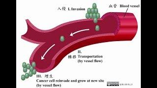 【科學史沙龍】血管的生成:多細胞生物體內高速公路的構築過程│ 李心予 2017.05.05 PART-2/3
