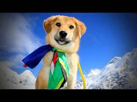 Rescue Dog CLIMBS MT. EVEREST