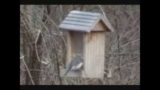 Pictures Of Birds At The Birdfeeders 01