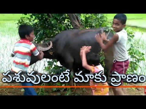 pashuvulante maku pranam Dj mix Bithiri Satthi Chinnappudu chata /Arjun Reddy / chatal band mix