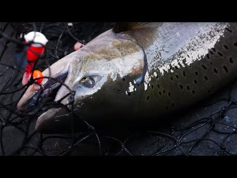 Huge CHINOOK SALMON Fishing Derby!! (DID WE WIN??!!)