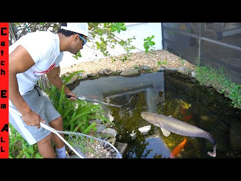 POND FISH INTRUDER Finally Gets CAUGHT!