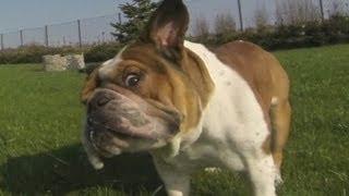 Super slow motion dog funny video /スーパースローモーション犬面白い...
