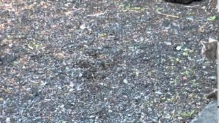 コルのモグラ狩り2 thumbnail