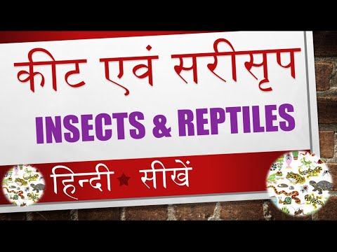 Learn Name of Insects and Reptiles in Hindi Video 10 of 14
