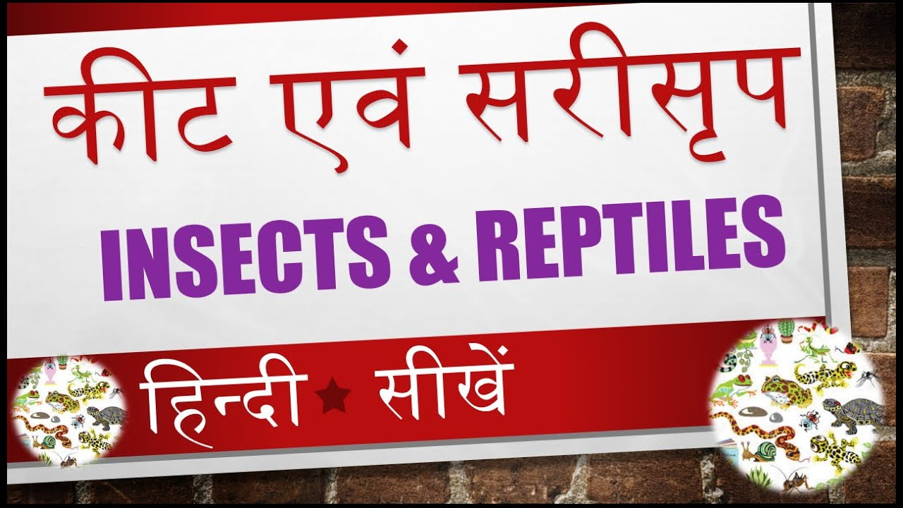 Learn Name Of Insects And Reptiles In Hindi Video 10 Of 14 Youtube