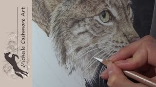 Lynx in Coloured Pencil Drawing Demonstration