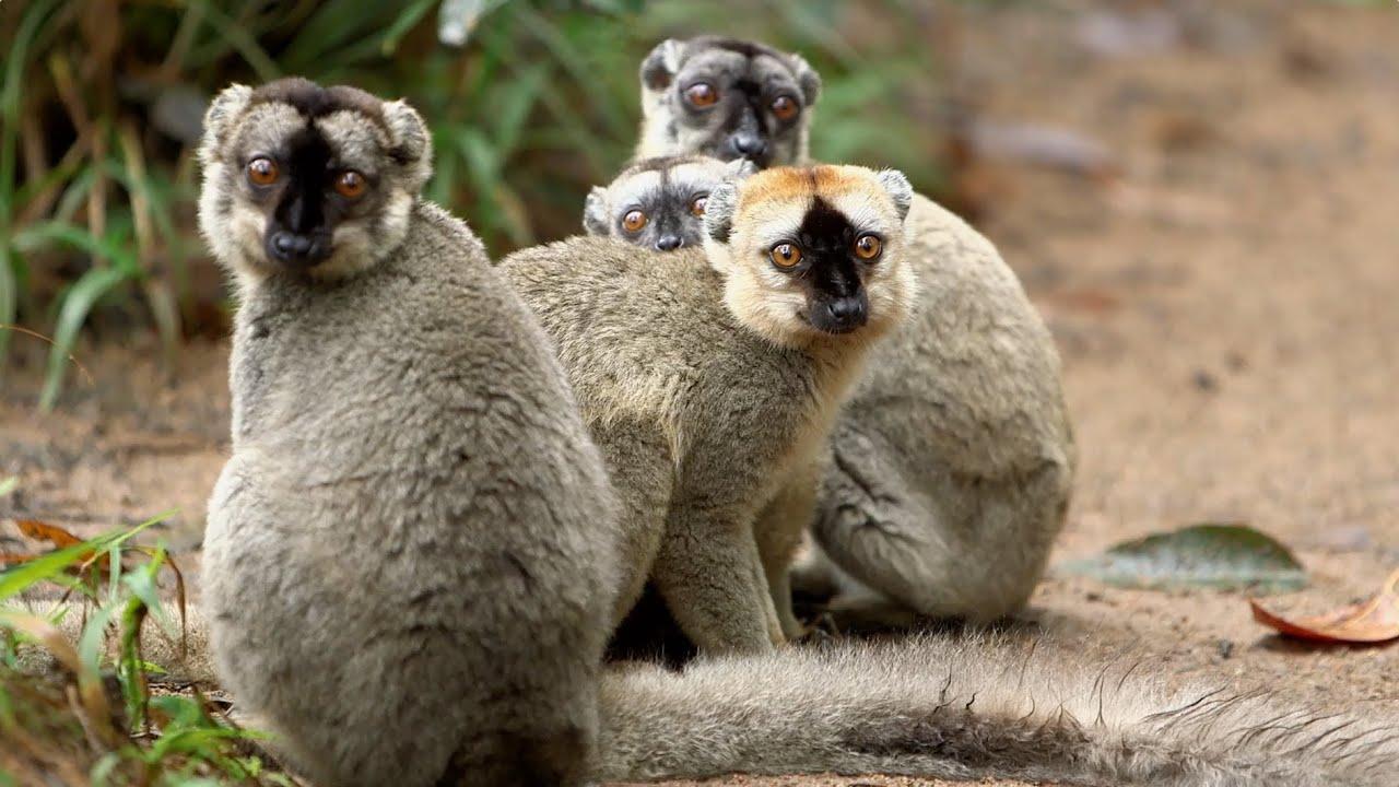 Island of Lemurs: Madagascar - Behind the Scenes Featurette [HD]