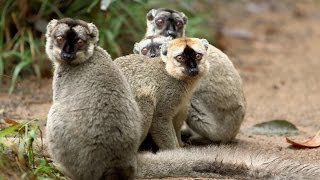 Island of Lemurs: Madagascar - Behind the Scenes Featurette [HD]