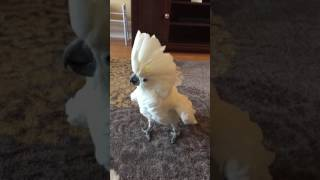 funny birds singing and dancing