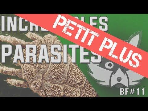CERVEAU et MICROBIOTE INTESTINAL - PP#1