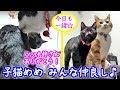 <2匹の猫通信>ハッチとマックの「ほっこりライブ」子猫めめ みんな仲良し!幸せだね!2019 01 04 - Cats Live in the bedroom.LIVE Stream.