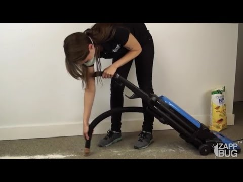 STEP #6: BED BUGS IN CARPET AND WALLS