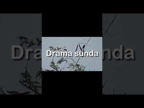Drama Sunda ( Aya Aya Wae) Karya Smp Pgri 384 Rendeh