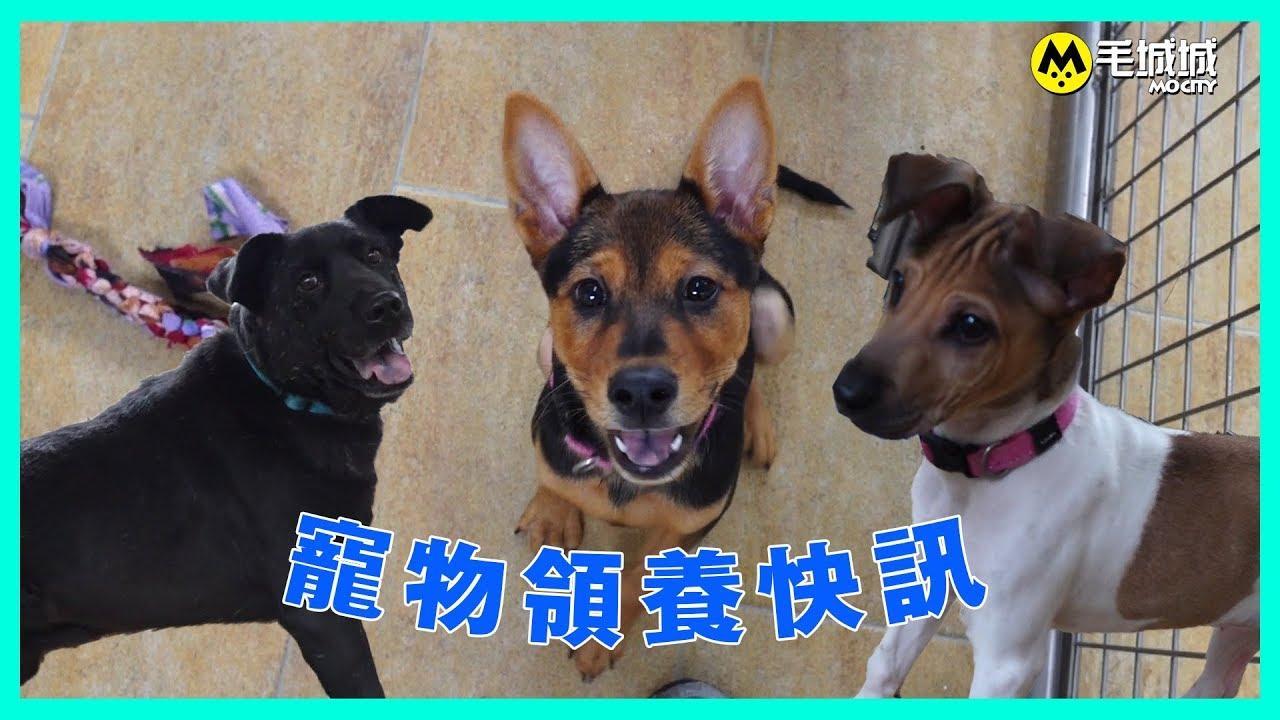 【寵物領養快訊】香港愛護動物協會 16/11/2017 - YouTube