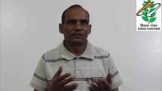 भिन्डी की उन्नत खेती कैसे करें 25-10-2016