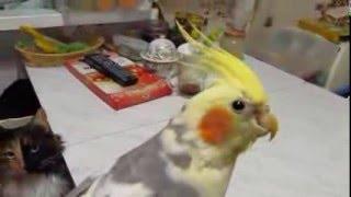 Выпускаю попугайчика из клетки полетать!!