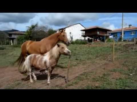 VISITA GUIADA POR LOS CASERINOS DE MAOXU VILLAVICIOSA 2014
