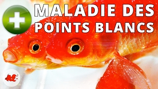 La Maladie des Points Blancs