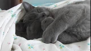 ЯНА СЛАДКИХ СНОВ Спокойной ночи от котика