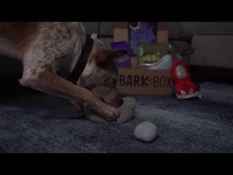 October's Household Horrors BarkBox - Director's Cut