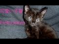 生後2ヶ月の黒猫と遊んでみた