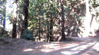 Old Coast Road in Big Sur - Trees to Views (you need to wait until the end)