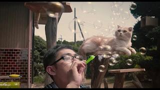 庭先に訪れる猫たちを眺めて楽しむアプリゲーム「ねこあつめ」が、日本...
