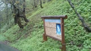 20160511奥飛騨平湯大滝公園(2)