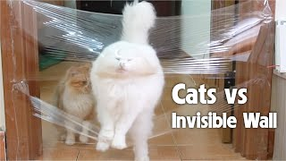 Cats vs Invisible Wall  Challenge 3: Jumping Over Walls