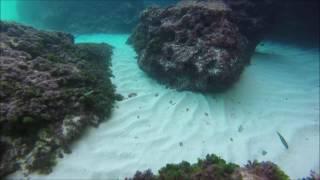 Snorkeling in majorca 1