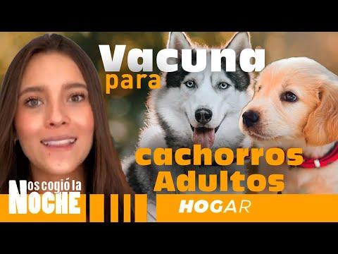 Vacunación Para Perros Cachorros Y Adultos - Lauvet