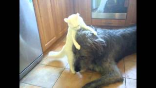 Irish Wolfhound and kitten