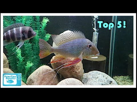 Our Top 5 Freshwater Tropical Fish - What Are Yours?