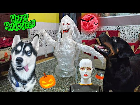 HALLOWEEN PRANK ON MY HUSKY AD ROTTWEILER || DOG CAN TALK PART 73 || Epic reaction. REVIEW RELOADED