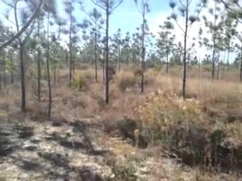 Eastern Diamondback  Rattlesnake in NW Florida 2013 11 19