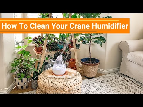 How To Clean Your Crane Humidifier