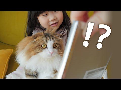 生まれて初めて鏡で自分の姿を見たもふ猫の反応がこちらです
