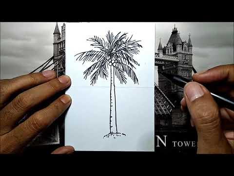 Keren Begini Cara Mudah Menggambar Pohon Kelapa