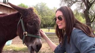 The Voluntourist - Corfu Donkey Rescue - Greece